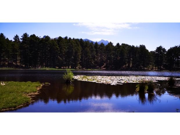 Image du Lac de Creno et de sa forêt en Corse du Sud